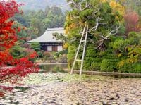 Scholar-led Kyoto Walking Tour: Japanese Gardens and Landscape Photos