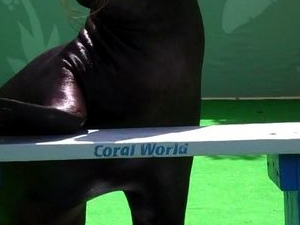 Sea Lion Encounter at Coral World Ocean Park Photos