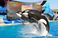 SeaWorld San Diego with Transport Photos