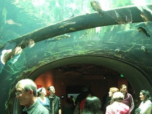 Skip the Line: California Academy of Sciences General Admission Ticket Photos