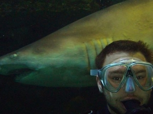 Shark Diving Xtreme in Sydney Photos