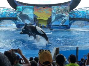 SeaWorld® Orlando Ticket  Photos
