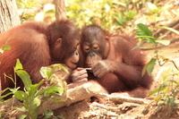 Singapore Shore Excursion: Singapore Zoo Private Tour Photos