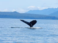 Sitka Whale-Watching and Marine Life Tour Photos
