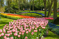 Skip the Line: Keukenhof Gardens Tour and Tulip Farm Visit from Amsterdam Photos