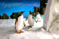 Skip the Line: Melbourne Aquarium Tickets Photos
