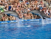 Skip the Line: Mallorca Marineland Tour Photos