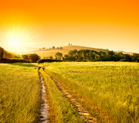 Small-Group Chianti and San Gimignano Sunset Trip from Siena Photos