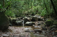 St Kitts Half-Day Rainforest Tour  Photos