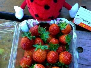 Mornington Peninsula including Strawberry Farm Day Tour from Melbourne Photos