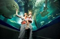 Sunshine Coast UnderWater World Entrance Ticket Photos