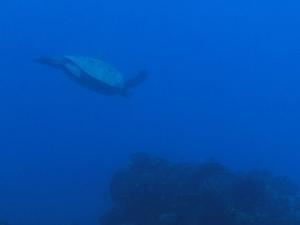 Atlantis Kona Submarine Adventure Photos