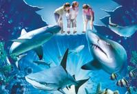 Sydney Shore Excursion: Skip-the-Line SEA LIFE Sydney Aquarium Entrance Ticket Photos
