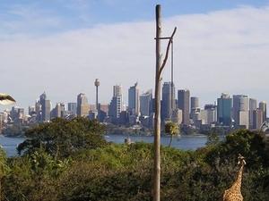 Sydney Taronga Zoo General Entry Ticket and Wild Australia Experience Photos