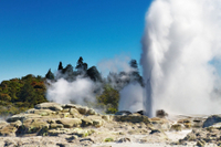 Tauranga Shore Excursion: Rotorua Highlights Photos