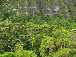 Manoa Waterfall Small Group Adventure Photos