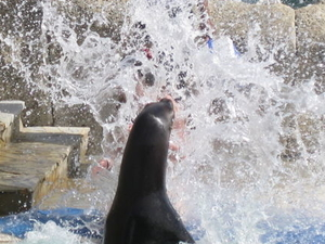 Sea Lion Encounter at Ocean World Photos
