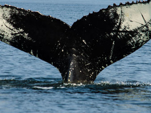 Full-Day Whale Watching Cruise from Quebec Photos