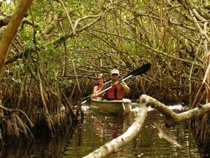 Mangrove Forest Kayak Eco-Tour in Florida Everglades Photos