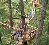 Treetop Canopy Walk in Whistler Photos