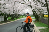 Viator Exclusive: Cherry Blossom Bike Tour in Washington DC Photos