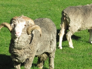Walter Peak High Country Farm Tour and Cruise from Queenstown Photos