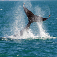 Whale-Watching Cruise and Hillarys Boat Harbour Day Trip from Perth Photos