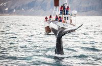 Whale Watching and Blue Lagoon Direct and Keflavik Airport Photos