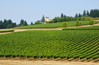 Willamette Wine Country Bike Tour from Portland Photos