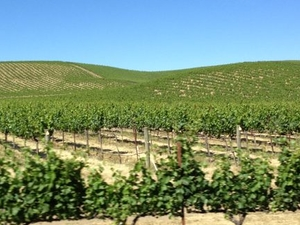 Customizable Wine Country Tour from San Francisco Photos