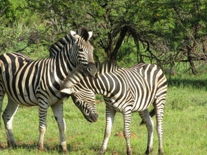 Pilanesberg Nature Reserve Safari and Sun City Day Trip Photos