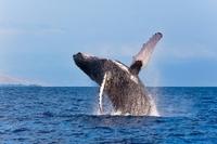 Zodiac Raft Whale Watching Adventure Photos